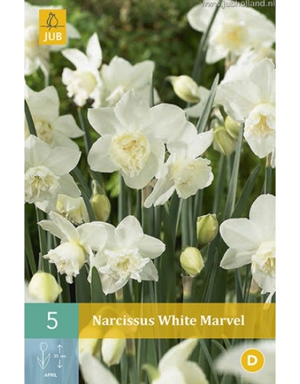 Narcissus 'White Marvel'
