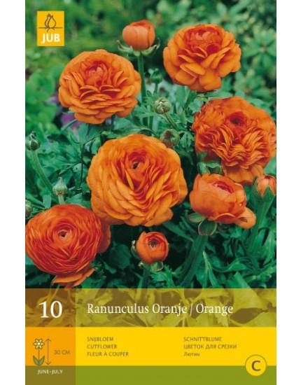 Ranunculus Oranje