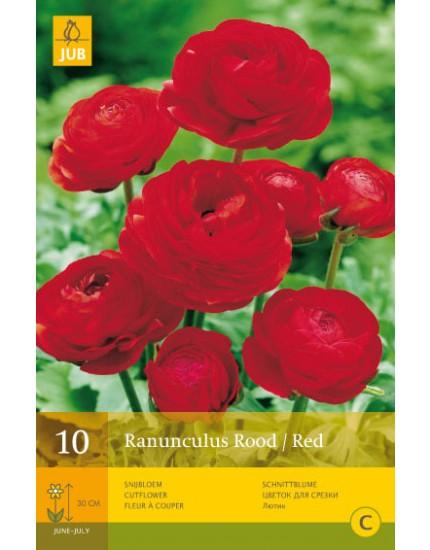 Ranunculus Rood