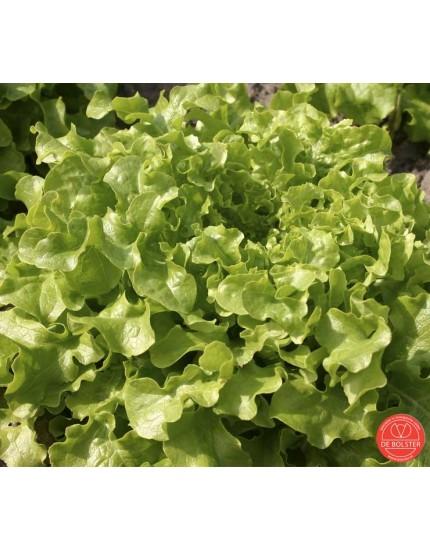 Eikenbladsla Salad Bowl