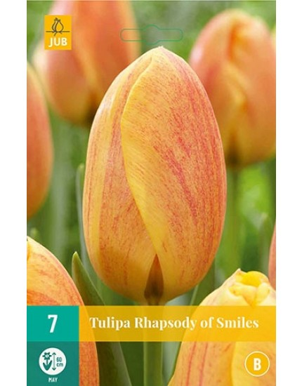 Tulipa 'Rhapsody of Smiles'