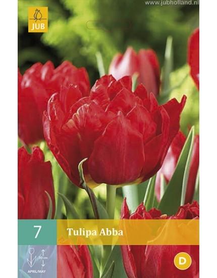 Tulipa 'Abba'