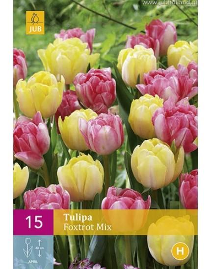 Tulipa 'Foxtrot' mix