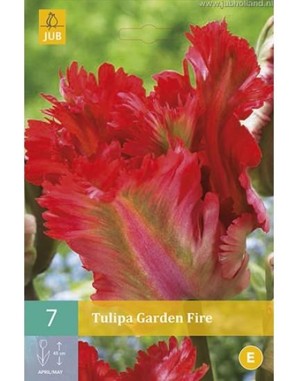 Tulipa 'Garden Fire'