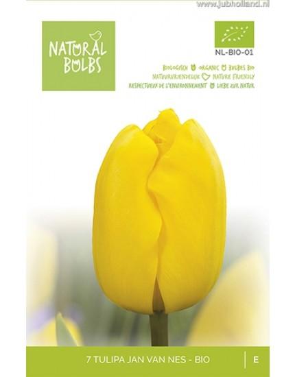 Tulipa 'Jan van Nes' biologisch