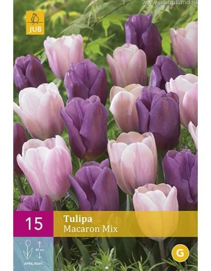 Tulipa 'Macaron' mix
