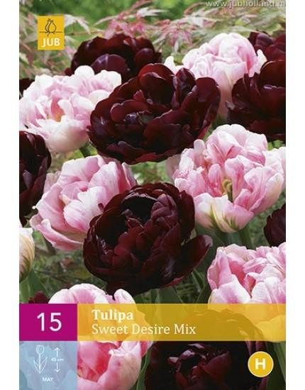 Tulipa 'Sweet Desire' mix