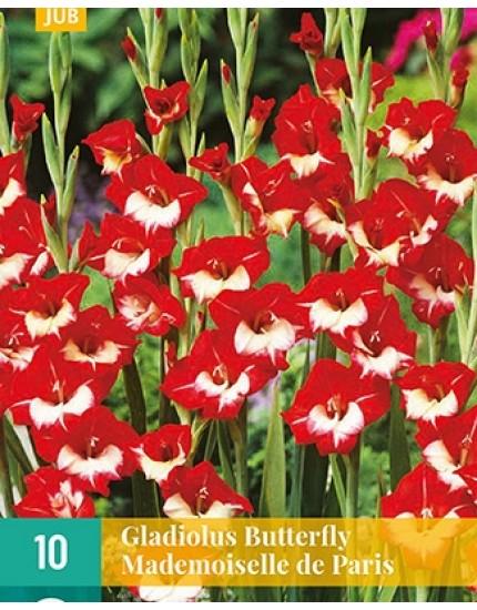 Gladiolus 'Mademoiselle De Paris'