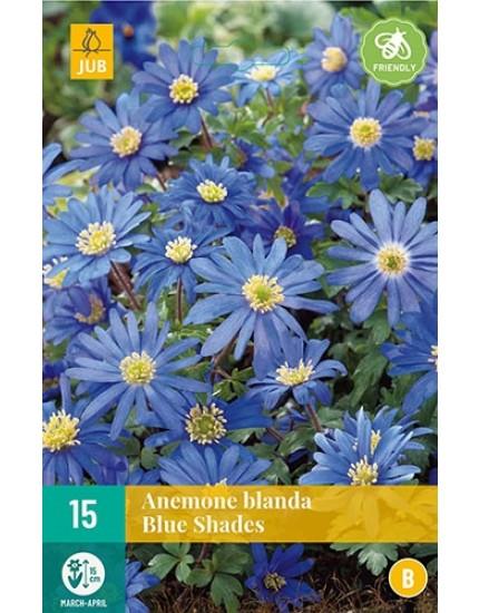 Anemone blanda 'Blue Shades'